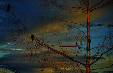 at sunset by SvitakovaEva