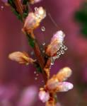 autumn flowers 2 by SvitakovaEva