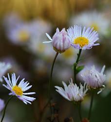 autumn flowers 3 by SvitakovaEva