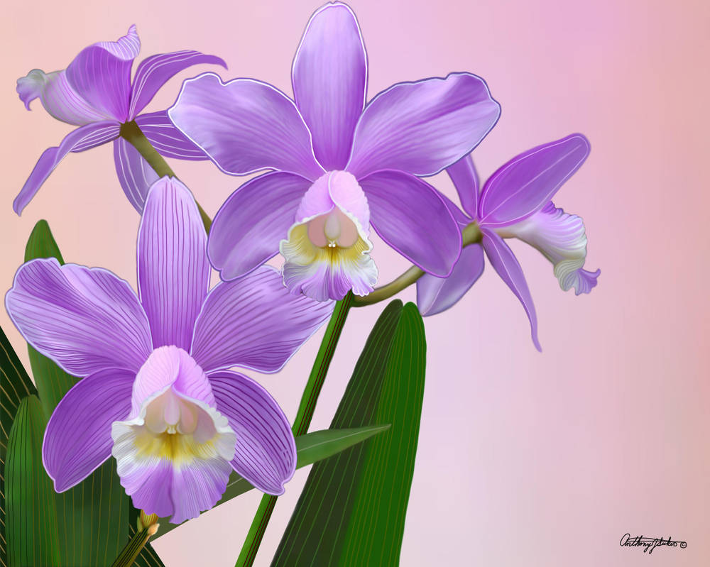 Orchid by artmovementspgh