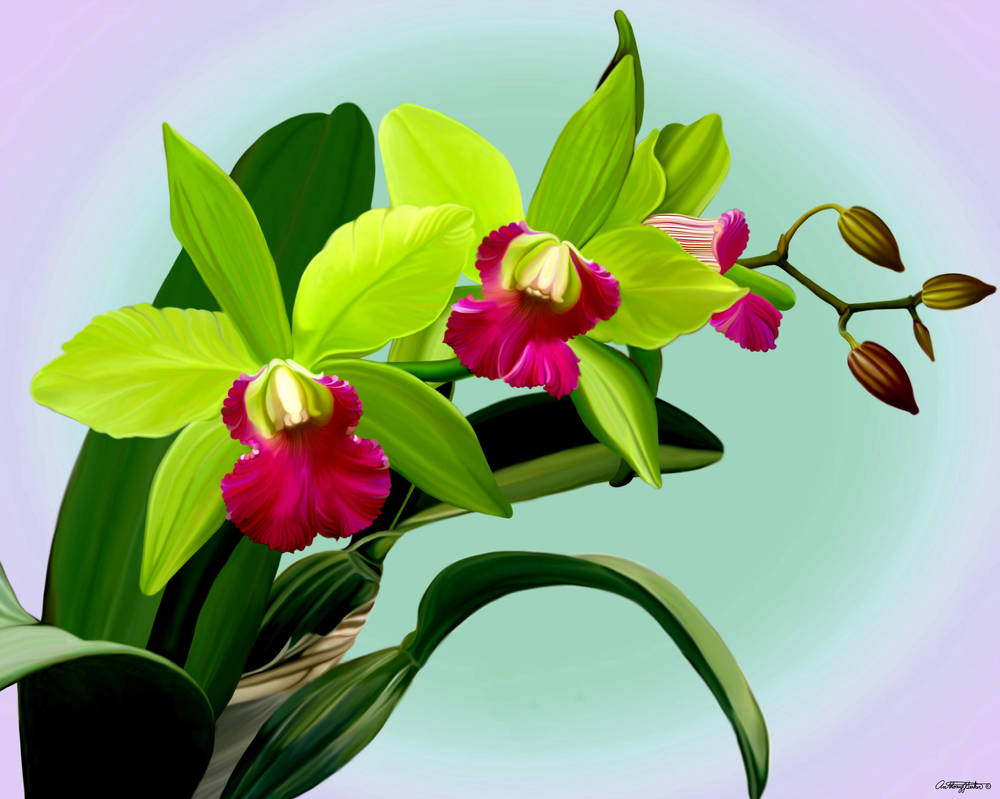 Green and Pink Cattleya Orchids by artmovementspgh