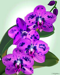 Spotted Orchid by artmovementspgh