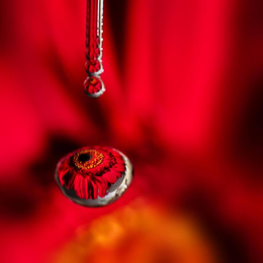 Red: drop by drop by AlejandroCastillo