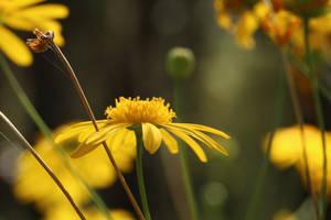 Yellow is fine II by AlejandroCastillo