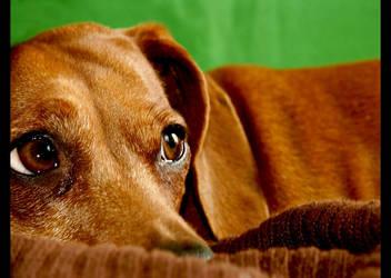 Brown on Green by sneekie-fochs