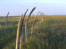 Whale bones 1 by Arctic-Stock