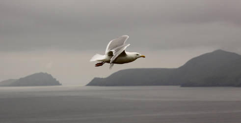 Slea Head and Seagull by fairydust76