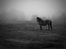 fog... by BrokenLens