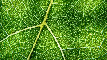 Vine leaf - super macro by viperpower