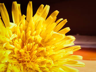 Flower1 by viperpower