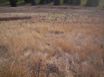 River Valley Grasses by Knightfall1972