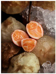 Navel Orange Closeup by MrsCreosote