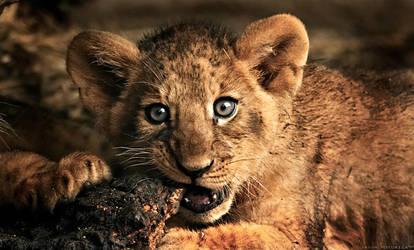 Lion Cub III by jay-peg