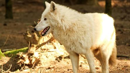 Etre connu comme le loup blanc by Oberon7up