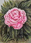 Peony painting/ peinture de pivoine by M4riDraw