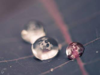 Pearls II by DwainDibley