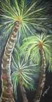 Stars Of The Tropics by juliarita