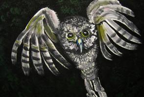 Night Owl by juliarita