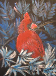 Cardinal In Blue Spruce by juliarita