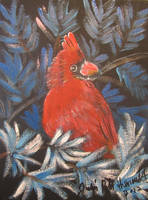 Cardinal In Blue Spruce by juliarita