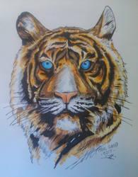Biro drawing, coloured by PaulSimo