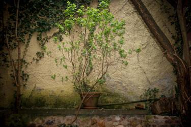 Garden of ... by johannmetzger