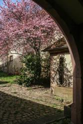 Springtime by johannmetzger