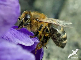 another Bee by albatros1