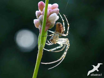 Spider In The Light by albatros1