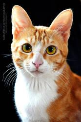 Cat portrait by SamanthaLi