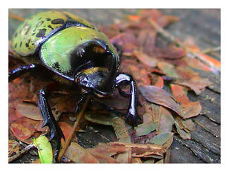 Unknown Beetle by microfilm