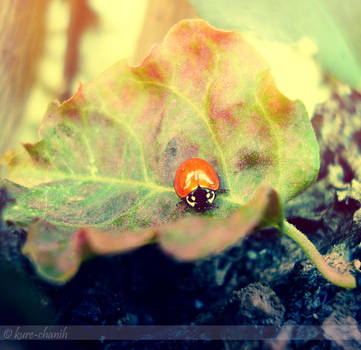 Livin' a dream by kure-chanih