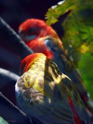 Two little birds by kure-chanih