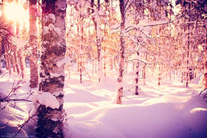 Snow in the forest 3 by howtiee93