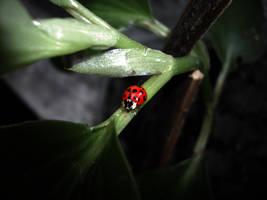 Ladybug by ObscureLilium