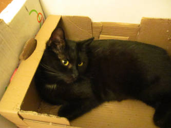 Black Beauty in a Box by Graupe