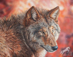 Autumn Queen (Grey Wolf) by Arcali