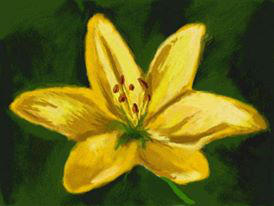 Butterscotch Lily (Nintendo DSi) by LynKofWinds