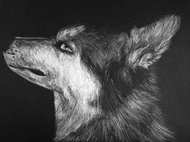 Husky by Lienetje