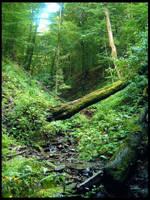 Rain forest by AdrianOlczyk